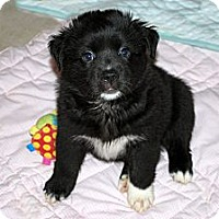 Adopt A Pet :: Lennox - Minneola, FL