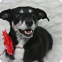 Adopt A Pet :: Della - Canoga Park, CA