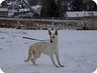 German Shepherd Dog Dog for adoption in Tully, New York - KELLY