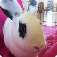 Adopt A Pet :: Bat Girl - Los Angeles, CA