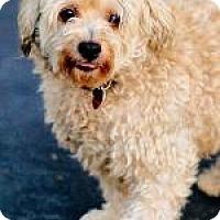 Adopt A Pet :: MARLEY - Pt. Richmond, CA