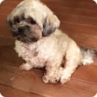 Adopt A Pet :: Junebug - Atlanta, GA