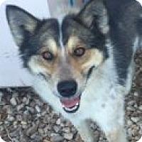 Adopt A Pet :: Malakai - Las Vegas, NV