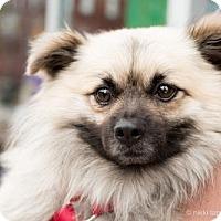 Adopt A Pet :: Jonathan Groff - Brooklyn, NY