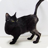 Adopt A Pet :: Tillie - Lufkin, TX