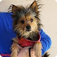 Adopt A Pet :: Sparky - Santa Maria, CA