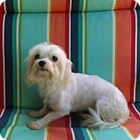 Adopt A Pet :: VIVIAN 6lb. - WOODSFIELD, OH
