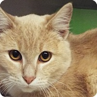 Adopt A Pet :: Cream - Grants Pass, OR