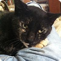 Adopt A Pet :: Calypso - Jacksonville, FL