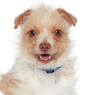 Small Breed Dog Rescue Los Angeles
