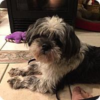 Adopt A Pet :: Gideon - Barrington, RI