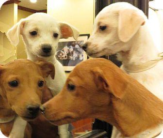 Rescue Small Dogs Las Vegas