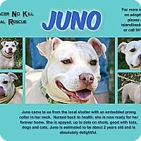 Adopt A Pet :: Juno - Holmes Beach, FL