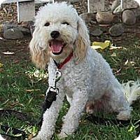Adopt A Pet :: Peanut - Santa Ana, CA