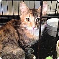 Adopt A Pet :: Nicole - Wenatchee, WA