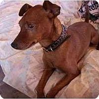 Adopt A Pet :: Parker - Phoenix, AZ