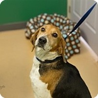 Adopt A Pet :: Molly-URGEN - Providence, RI