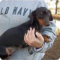 Adopt A Pet :: Dixie - Adamsville, TN