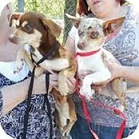Adopt A Pet :: Melinda and Melody(REDUCED) - Staunton, VA