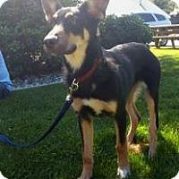 Adopt A Pet :: Oskar - Mill Creek, WA