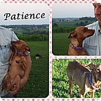 Adopt A Pet :: Patience - DOVER, OH