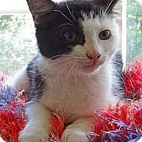 Adopt A Pet :: Wendell - N. Billerica, MA