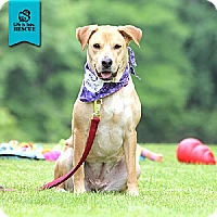 Adopt A Pet :: Sophie - Temple, GA
