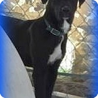 Adopt A Pet :: JJ - Henderson, KY