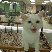 Adopt A Pet :: Koda - Medina, OH