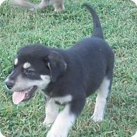 Adopt A Pet :: Jinxx Adoption Pending - East Hartford, CT