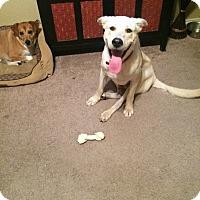 Adopt A Pet :: Hamilton - West Hartford, CT