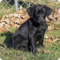 Adopt A Pet :: Umala - Pleasant Plain, OH