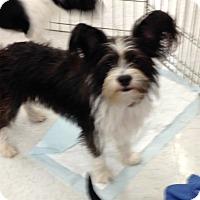 Adopt A Pet :: Jelly Bean - Inverness, FL