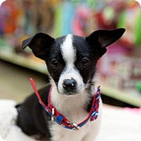 Adopt A Pet :: Dalton - Great Bend, KS