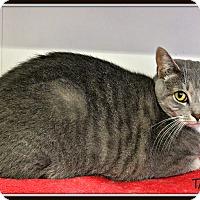 Adopt A Pet :: Tarzania - Dunkirk, NY