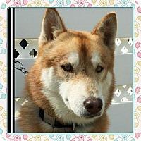 Adopt A Pet :: Clancy - Anaheim, CA