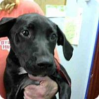 Adopt A Pet :: LAGO - Atlanta, GA