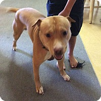 Adopt A Pet :: Yager (Courtesy Posting) - Saranac Lake, NY
