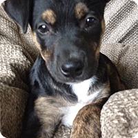 Adopt A Pet :: Zoe - Memphis, TN
