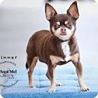 Adopt A Pet :: Spinner - Shawnee Mission, KS