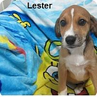 Adopt A Pet :: Lester - Bartonsville, PA