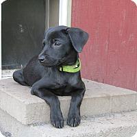 Adopt A Pet :: Ruth Bader - Pennigton, NJ