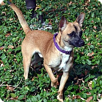 Adopt A Pet :: Zeus-Adoption pending - Bridgeton, MO
