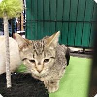 Adopt A Pet :: Arianna - Avon, OH