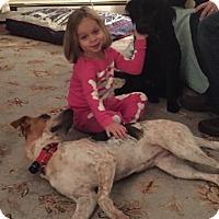 Adopt A Pet :: Olivia - Bedford Hills, NY