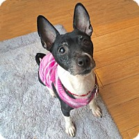 Adopt A Pet :: Nina (VA) - Virginia Beach, VA