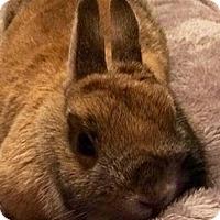 Adopt A Pet :: Venus - Patterson, NY