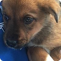 Adopt A Pet :: Rocky - Lancaster, KY