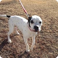 Adopt A Pet :: Macie - Larned, KS