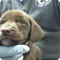 Adopt A Pet :: A282887 - Conroe, TX
